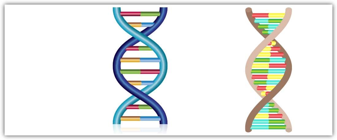 3b DNA modeli